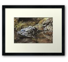 Dwarf Crocodile Framed Print