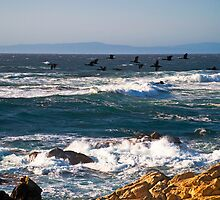 Cormorants on the Wing, Pebble Beach by MarkEmmerson