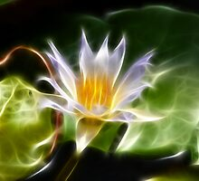 Water Lilly by Clintpix
