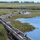 The Boardwalk At Point Pelee by Barry W  King