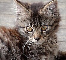 The kitty from the pound. . .  by DebbyZiegler