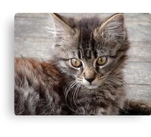 The kitty from the pound. . .  Canvas Print