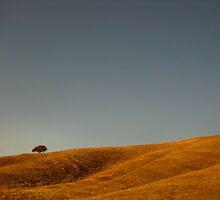 Tree by Desiree Salas