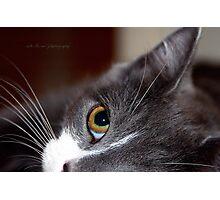 Innocence © Vicki Ferrari Photography Photographic Print
