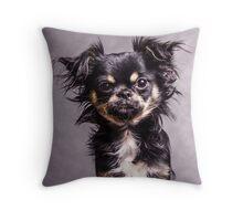 Longhair Chihuahua Throw Pillow