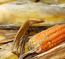 Corn by Ginger  Barritt