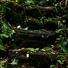 nature's steps. by kapualani .