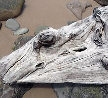 Weathered Tree by Roz McQuillan