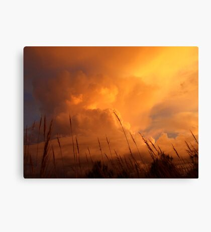 SPEAR GRASS SUNSET Canvas Print