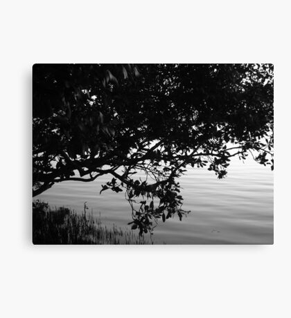 Myterious Mangrove Canvas Print