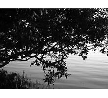 Myterious Mangrove Photographic Print