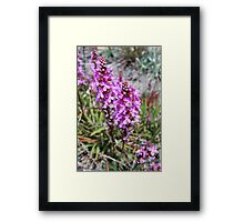 Flower Spike of the Grass Trigger Plant. Mt Buffalo Framed Print