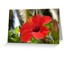 tropical  flowers(Hibiscus) Greeting Card