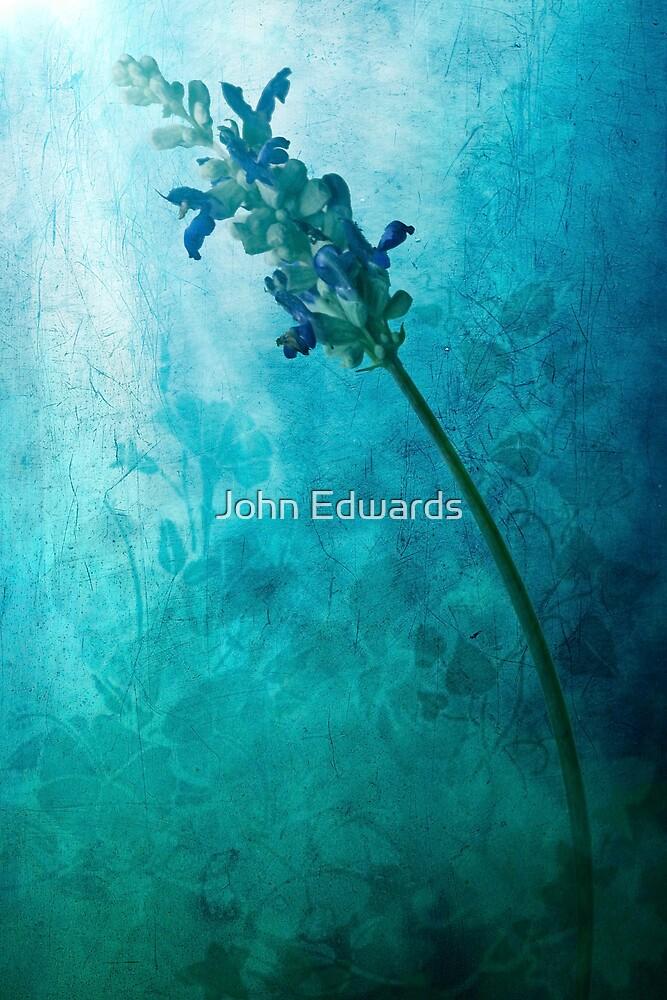 Fae by John Edwards