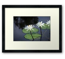 Lillies on the pond Framed Print