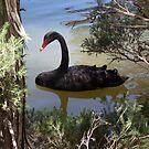 Black Swan by Arkani