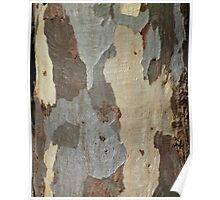 Gum tree bark 6 Poster