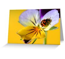 Beautiful Little Lady Greeting Card