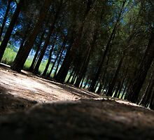 Into the wood by M J