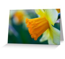One thousand and one yellow daffodils Greeting Card