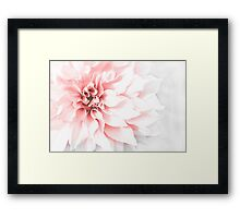 Fade to pink Framed Print