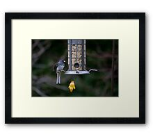Another Down Day Framed Print
