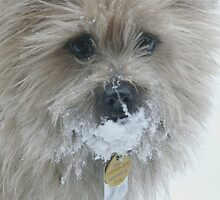 snow ball. . ..  by DebbyZiegler