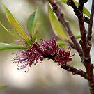 Spring, Apple flowers by 29Breizh33