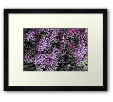 Lilacs Fade to Black and White Framed Print