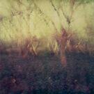#017 by Paul Desmond