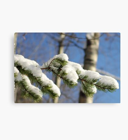 Nature's Icing Canvas Print