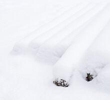 Logs by Walter Quirtmair