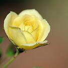 Tiny Rose by Donna Adamski