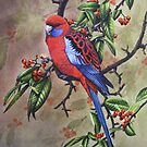 Crimson Rosella by Philip Holley