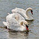 Mr & Mrs Swan by AnnDixon