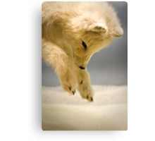 Arctic fox Canvas Print