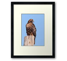 Rufous Morph Red-tailed Hawk Framed Print