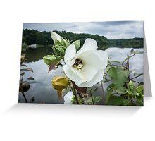 Bee inside white flower Greeting Card
