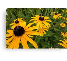 Green insect on yellow flower Canvas Print