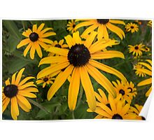 Green insect on leaf of yellow flower Poster