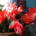 Christmas Cactus 2015 by goddarb