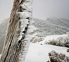 Winter on the Razorback, Mt Hotham, Australia by Michael Boniwell