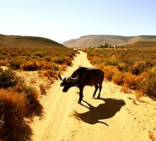 South Africa by Kristian Schmidt