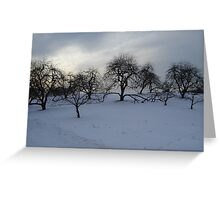 Sunset Glow Over the Apple Orchard Greeting Card