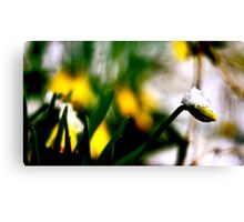 Snow On A Flower Canvas Print
