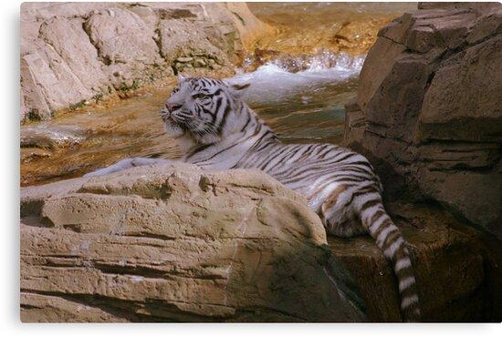 Bathing Beauty by MMerritt