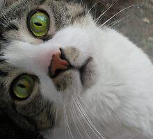 I have Cat-risma! by Blaze66