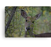 Deer Seeking Canvas Print