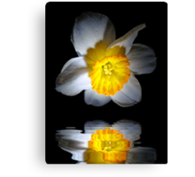 Reflection of a Daffodil Canvas Print