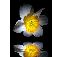 Reflection of a Daffodil Photographic Print